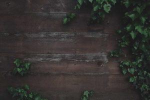 photo-1492892132812-a00a8b245c45-img-header-1000k
